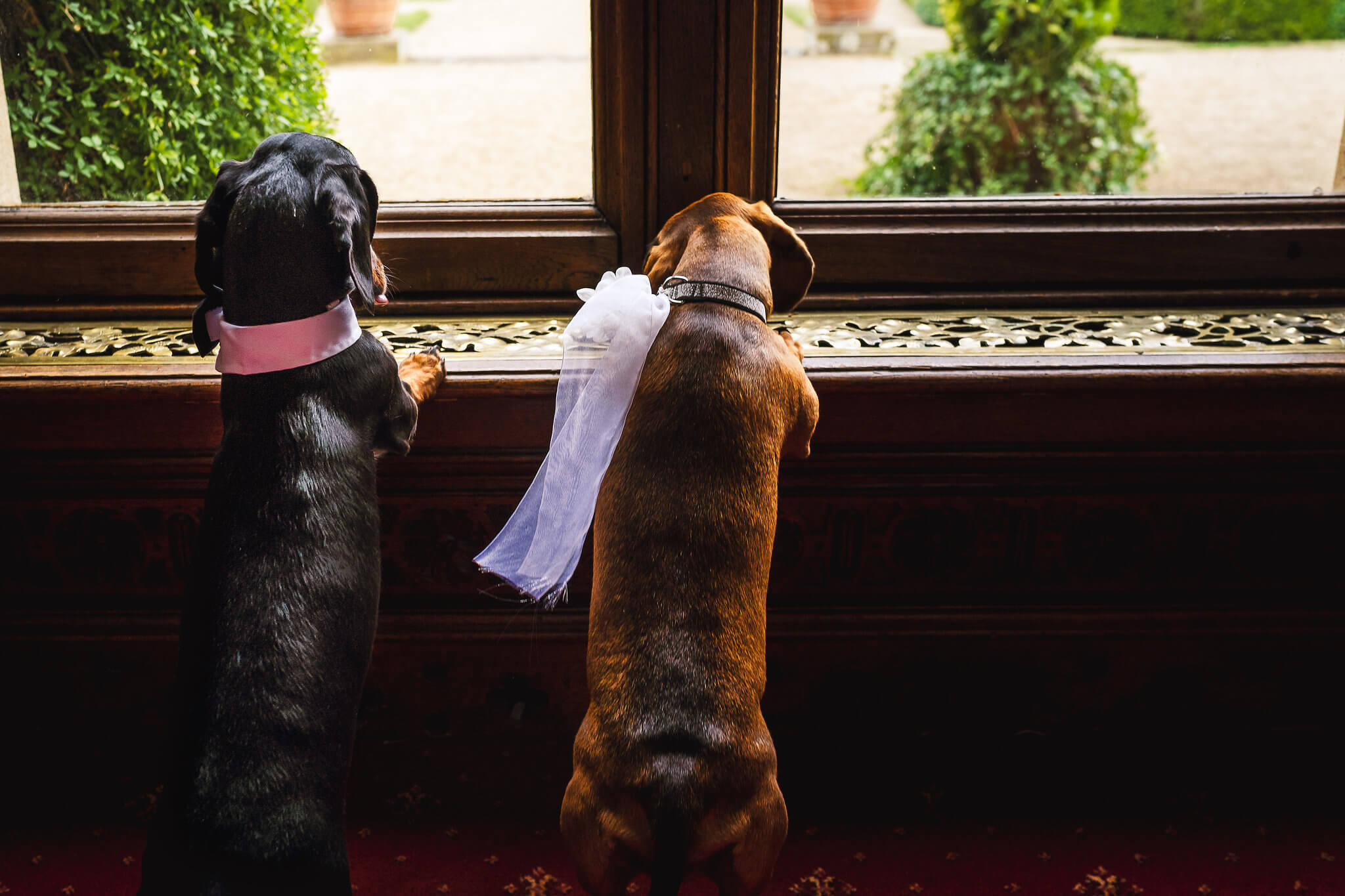 Dogs in a pet friendly venue