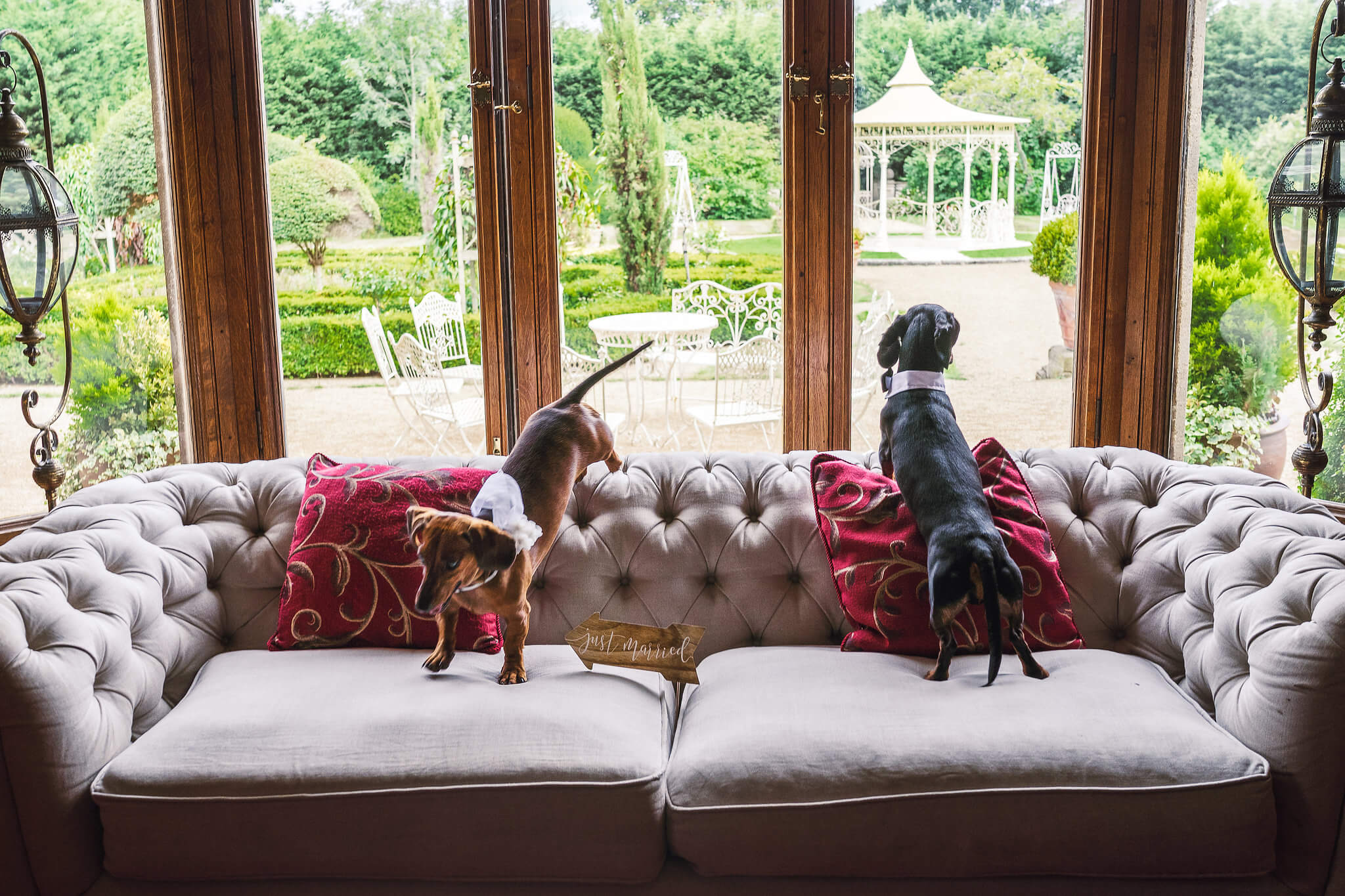 pet friendly venue in the library